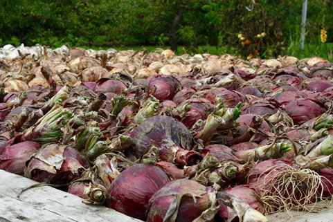 Onions for sale at Hi-Hope farm shop, Ashburn. Photo by Barbara Howe