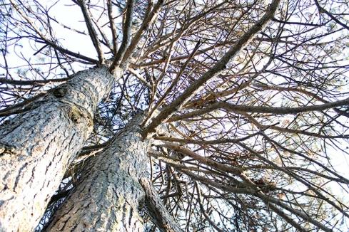 Tree in Oshawa Cemetry. Photo by Barbara Howe