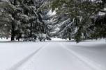 Winter driveway. Photo by Barbara Howe