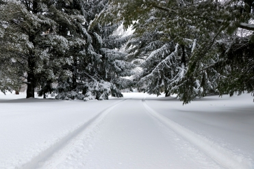 Winter driveway. Photo by Barbara Howe